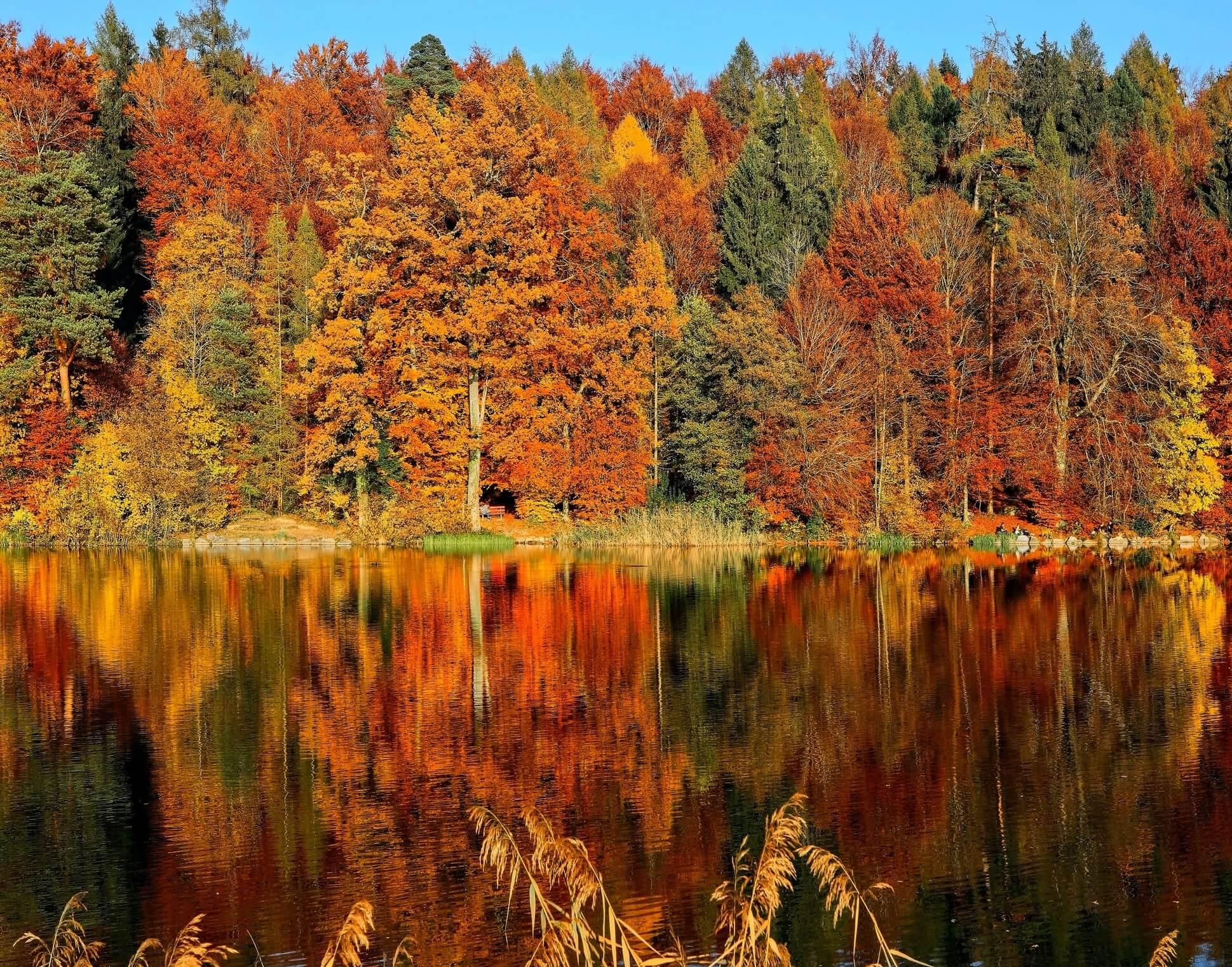 dove andare a ottobre bosco